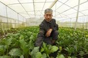 Lão nông thu nhập khá nhờ trồng đủ loại rau bán Tết