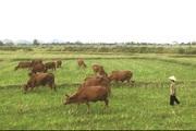 Thu hồi trên 70% đất nông nghiệp sẽ được bồi thường thế nào?