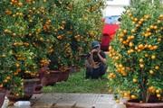 """Đà Nẵng: Tiểu thương chợ hoa Tết """"méo mặt"""" vì khách đến chỉ để... chụp hình"""