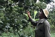 """Đồng Nai: Trồng 3 cây, nuôi đàn bò 400 con, ông nông dân có khối tài sản """"kếch sù"""""""