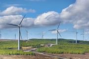 Phú Yên: Chuyển mục đích 11,55ha rừng để thực hiện dự án điện gió