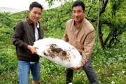 Sơn La: Mưa đá tại Mộc Châu gây thiệt hại thế nào?