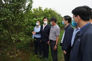 """Bắc Ninh: Xây dựng nông thôn mới nâng cao, """"không châm chước"""" tiêu chí môi trường"""