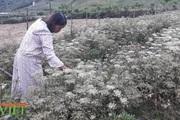 """Chính sách hỗ trợ sản xuất """"tiếp sức"""" cho nông nghiệp Sìn Hồ phát triển"""