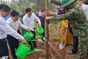 """Điện Biên: Phát động trồng 10.000 cây hoa ban """"Vì một Việt Nam xanh"""""""