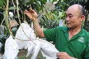 """Hiệu quả từ mô hình """"nông dân dạy nông dân"""" ở huyện Mai Sơn"""