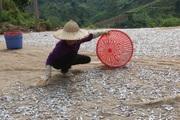 Nông dân Quỳnh Nhai: Thêm thu nhập từ nghề làm cá khô sông Đà