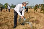TT-Huế: Trồng mới 7 triệu cây xanh