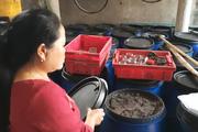 Quảng Trị: Dân kêu trời vì phải sống bên hàng trăm tấn hải sản hôi thối suốt 5 năm