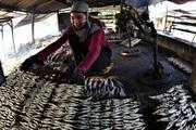 Ra khơi vài ba tiếng, ngư dân Quỳnh Nghĩa đem về cá, tôm cua, mực,... đầy ắp ằm ặp các thuyền thu cả triệu đồng