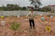 Clip: Nông dân Hà Tĩnh tất bật vào vụ đào mới