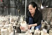 """Gái xinh mỗi vụ thu hoạch 20.000 bịch nấm sạch đủ loại, """"hái"""" đều 20 triệu đồng/tháng"""