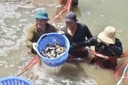 Tại huyện Hòa Vang (Đà Nẵng): Vốn tín dụng chính sách giúp nhà nông đổi đời