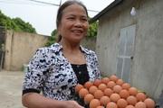 """Hà Nội: Kỳ lạ trại gà 4 tháng không phải dọn phân, trứng luộc lên ăn béo thơm mà không thoát """"nỗi đau"""" này"""