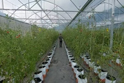 """Bình Định: Mô hình trang trại sản xuất nông nghiệp công nghệ cao """"3 sạch"""" độc đáo trên đồi"""