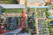 Trầm trồ với vườn rau sạch xanh um trên sân thượng của gia đình ở Bình Dương