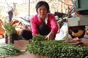 Trồng măng tây xanh, một ông nông dân Lâm Đồng thu lợi nhuận gấp 4-5 lần trồng cà phê