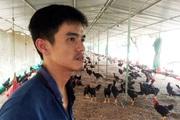"""Cám cảnh: Giá thức ăn chăn nuôi tăng 5-6 lần, nông dân thua lỗ triền miên phải """"treo"""" chuồng"""