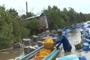 Làm giàu từ mô hình nuôi hàu bằng giàn bè thùng nhựa, mang lại hiệu quả kinh tế cao