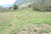 Yên Bái: Triển vọng từ mô hình trồng na ở huyện Văn Chấn