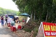 Chủ tịch TT-Huế chỉ đạo ngăn chặn việc tung tin đồn thổi nhằm đẩy giá bất động sản