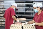 Tây Ninh: Sắp có nhà máy ấp trứng gia cầm 200 tỷ, xuất khẩu gà giống sang Campuchia chỉ trong 1 giờ
