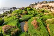 Loại cây mọc trên đá xanh le xanh lét trông rất bắt mắt ở biển Quỳnh, Nghệ An