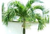 4 loại cây phong thủy tăng cường dương khí, mang may mắn, tài lộc cho gia chủ