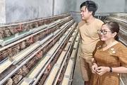 Quảng Trị: Nuôi la liệt thứ chim bé như nắm tay, nông dân có thu nhập