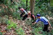 Lai Châu: Ý thức giữ rừng của người dân nâng lên, số vụ cháy rừng giảm