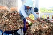 Giá 1kg hành tím chỉ bằng 1-2 cốc trà đá, nông dân Bình Định như ngồi trên đống lửa