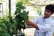 """Ninh Thuận: Khi nông dân trẻ thành """"thủ lĩnh"""" các   hợp tác xã"""