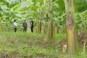 Sơn La: Để xây dựng nông thôn mới không chạy theo thành tích