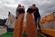 Trong bối cảnh dịch bệnh COVID-19 và biểu tình, người nông dân Ấn Độ thu hoạch lúa mì kỷ lục