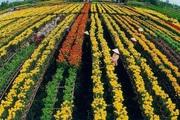 3 đối tượng được miễn thuế đất nông nghiệp mới nhất