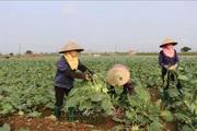 Bắc Ninh: Phê duyệt cụm công nghiệp Cao Đức- Vạn Ninh 54ha với tổng vốn đầu tư 565 tỷ đồng