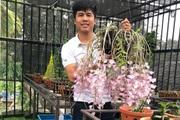 Bí kíp chăm sóc vườn lan của những nghệ nhân trồng lan đất Mỏ