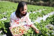 """Vừa làm nông vừa làm du lịch, người dân Sơn La """"mở mắt có tiền"""""""