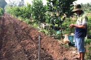 An Giang: Trồng mít Thái siêu sớm công nghệ cao, ít tốn công chăm mà trái mít vẫn to bự