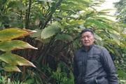 Loại cây dễ trồng, ném hạt ở đâu lên ở đó, không tốn công chăm giúp nông dân Tuần Giáo đổi đời