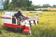Quảng Nam: Xây dựng nền nông nghiệp hiện đại, nông dân giàu có