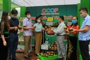 Nông thôn Tây Bắc: Phát triển thương hiệu khoai sọ Thuận Châu