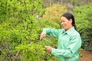 Nông Thôn Tây Bắc: Chi Hội trưởng phụ nữ tâm huyết với công việc
