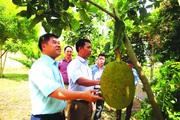 Hà Giang: Nối dài con đường no ấm về với bản làng