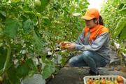 """Nơi bảo vệ """"mùa vàng"""" an toàn để nông sản Việt xuất ngoại, thu về hàng chục tỷ USD"""