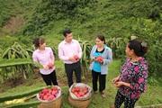 TP.HCM: Huyện cuối cùng về đích nông thôn mới nâng cao là huyện nào?