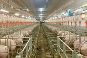 Tại sao Gia Lai đón nhiều dự án chăn nuôi lớn?