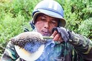 Cà Mau:Ong ruồi làm tổ trên cây lức cho mật tốt đến đâu mà hết đời cha đến đời con đều bảo nhau đi kiếm