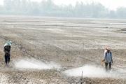 Chính thức: Cấm thuốc trừ cỏ Glyphosate từ 1/7/2021