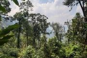 Lào Cai ban hành Chỉ thị về quản lý, bảo vệ và ngăn chặn tình trạng chặt, phá rừng
